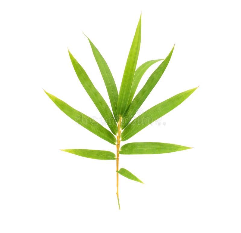 Foglia di bamb? fotografia stock