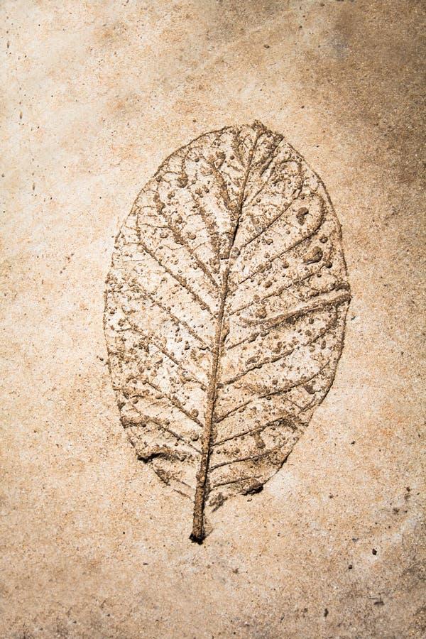 Foglia di bassorilievo su cemento fotografie stock libere da diritti