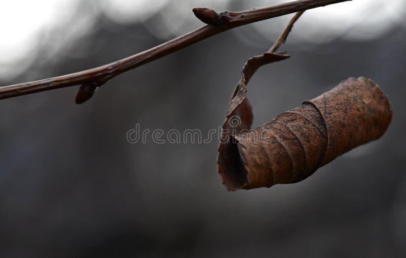 Foglia di inverno fotografia stock libera da diritti