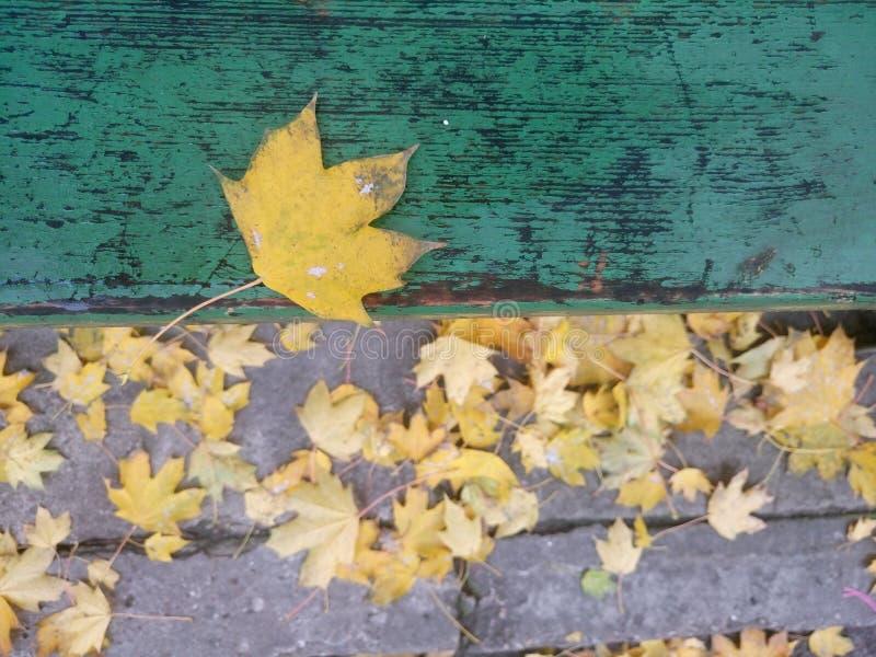 Foglia di ottobre fotografia stock libera da diritti
