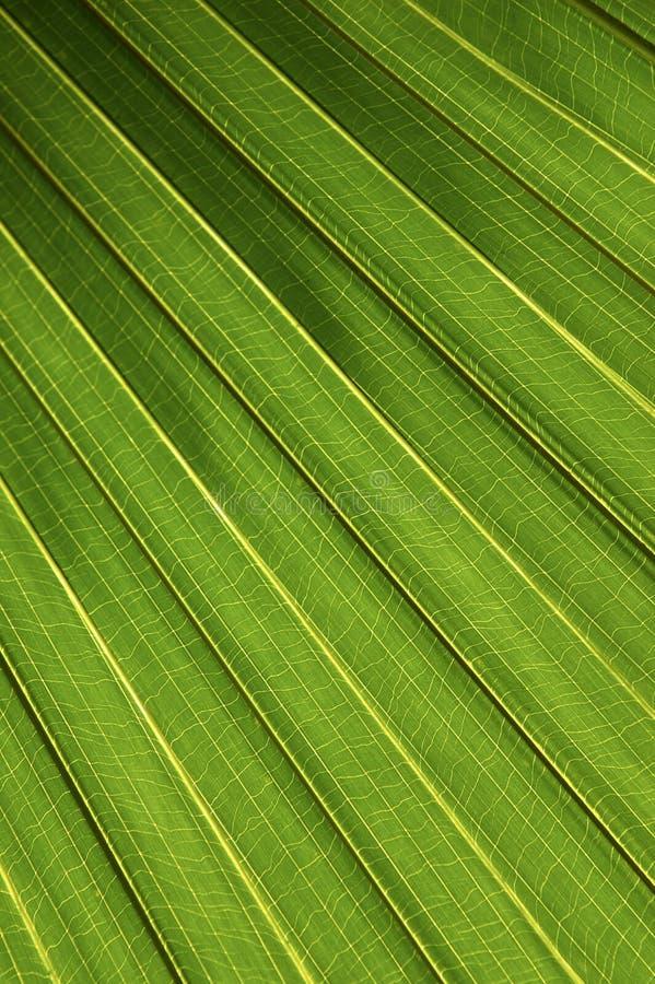 Download Foglia di palma immagine stock. Immagine di arteria, angolo - 206349