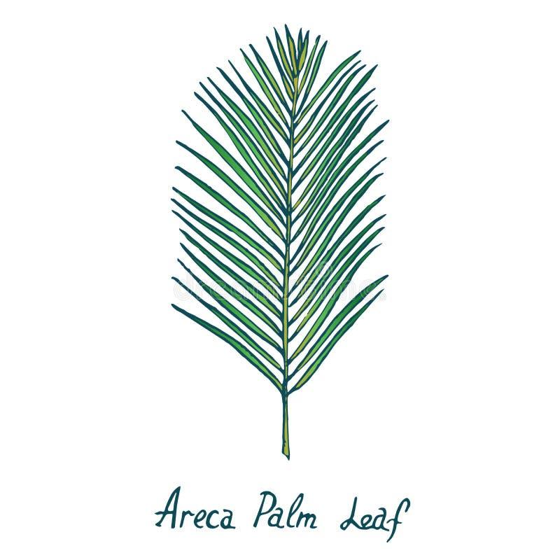 Foglia di palma dell'areca, scarabocchio disegnato a mano, schizzo illustrazione di stock