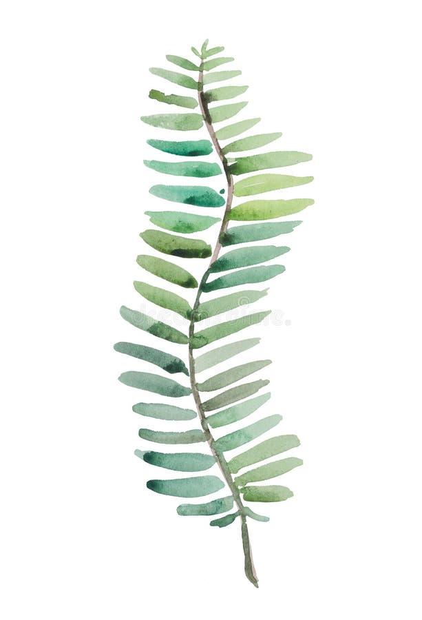 Foglia di palma luminosa, immagine dell'acquerello per uso in prodotti tematici immagini stock libere da diritti