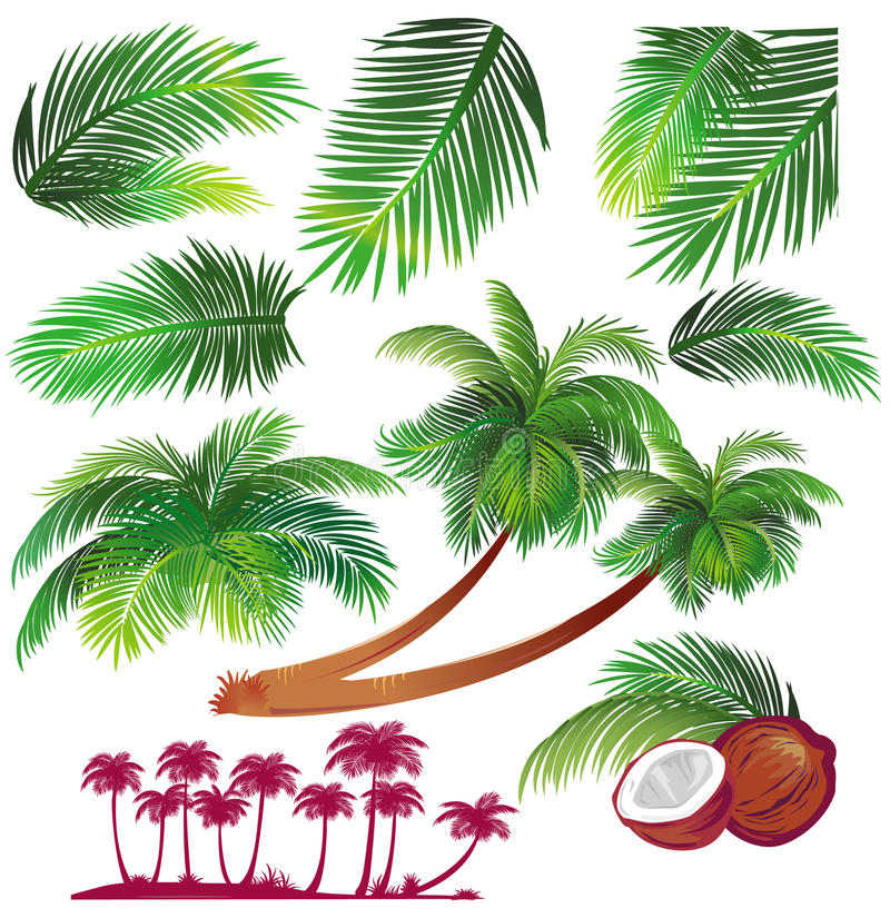 Foglia di palma tropicale illustrazione vettoriale