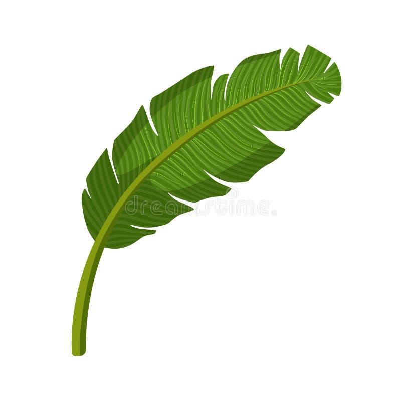 Foglia di palma tropicale Illustrazione variopinta di vettore del fumetto illustrazione di stock