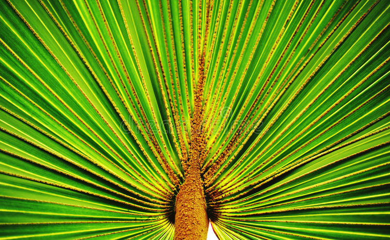 Foglia di Palmtree immagini stock