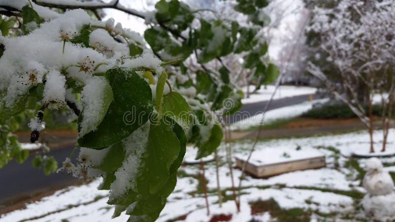 Foglia di Snowy immagini stock libere da diritti