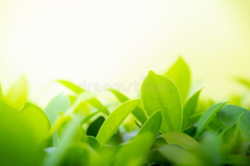 Foglia di verde del primo piano sul fondo confuso del bokeh per la carta da parati di freschezza e naturale fotografie stock libere da diritti