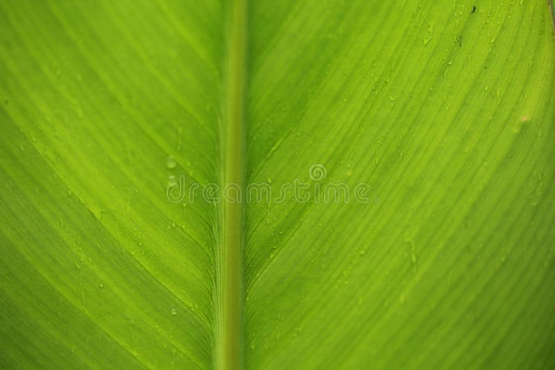 Foglia di Waterdrops fotografia stock