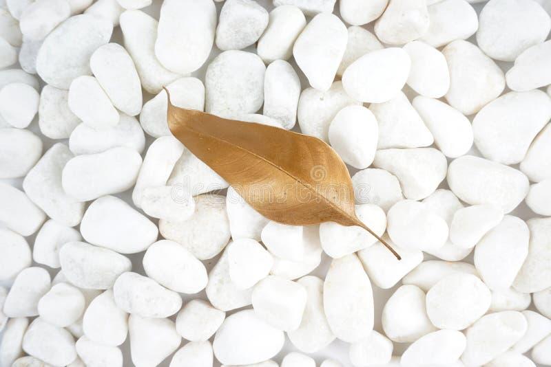 Foglia dorata isolata sulla pietra bianca cobblestone Foglia di oro Struttura della priorità bassa immagine stock