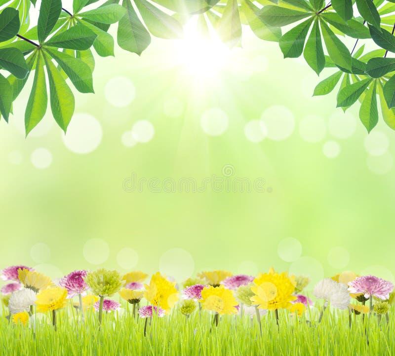 Foglia e fiore verdi di bellezza sulla stagione primaverile dell'erba immagine stock