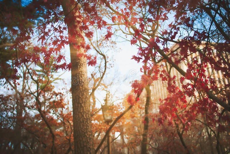 Foglia ed albero nella stagione di autunno alla Corea del Sud fotografia stock libera da diritti