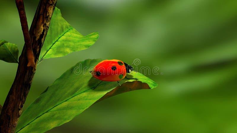 Foglia, fine su, insetto, Ladybird fotografie stock libere da diritti