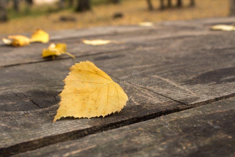 Foglia gialla fotografia stock