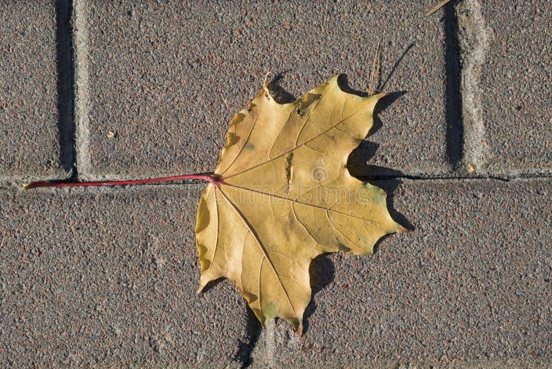 Foglia gialla di autunno sulle mattonelle del marciapiede fotografia stock