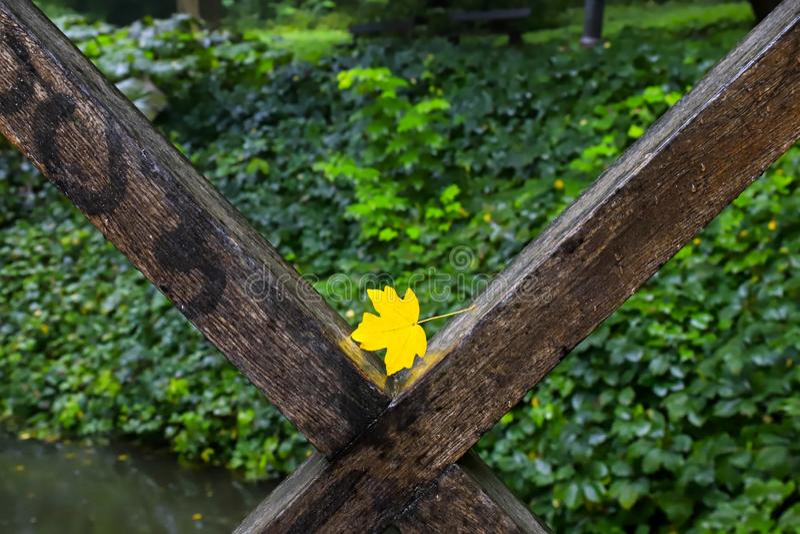 Foglia gialla su un recinto di un ponte sopra un piccolo fiume in un parco di autunno Caduta del foglio fotografia stock libera da diritti