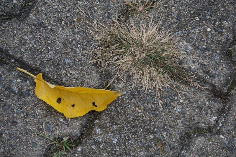 Foglia gialla sul marciapiede immagini stock