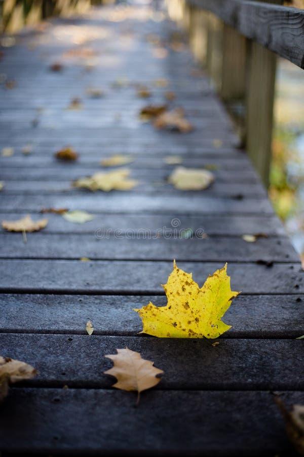 Foglia gialla sul passaggio pedonale nella caduta immagini stock libere da diritti