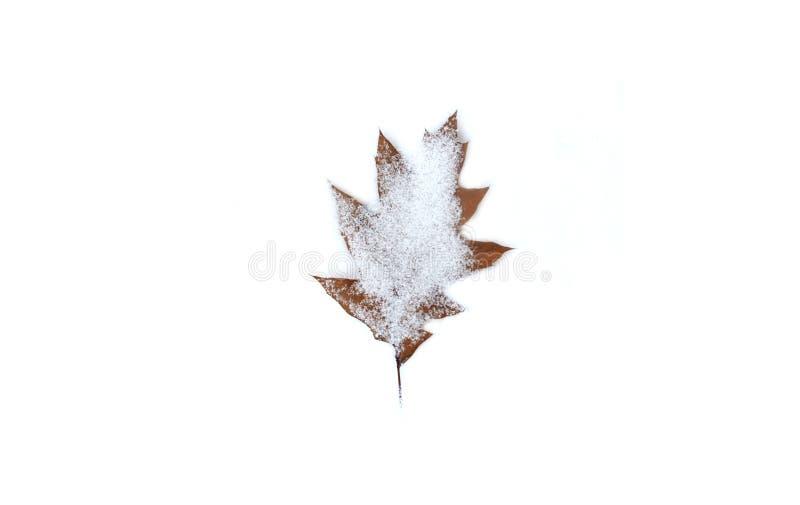 Foglia marrone della neve bianca fotografie stock