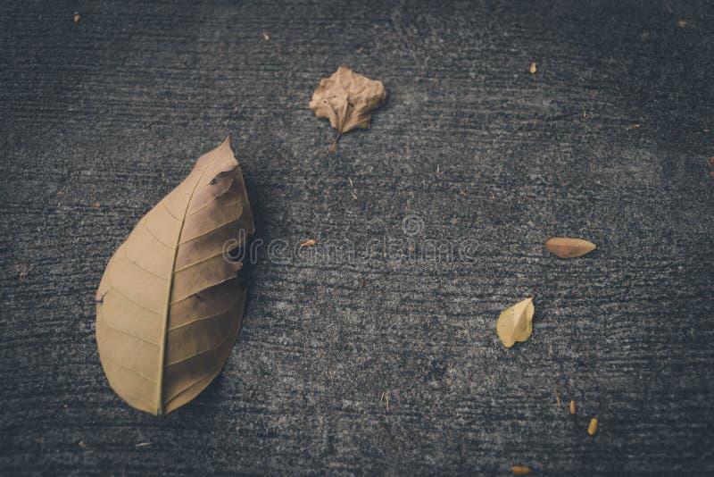 Foglia secca sul pavimento di calcestruzzo immagine stock libera da diritti
