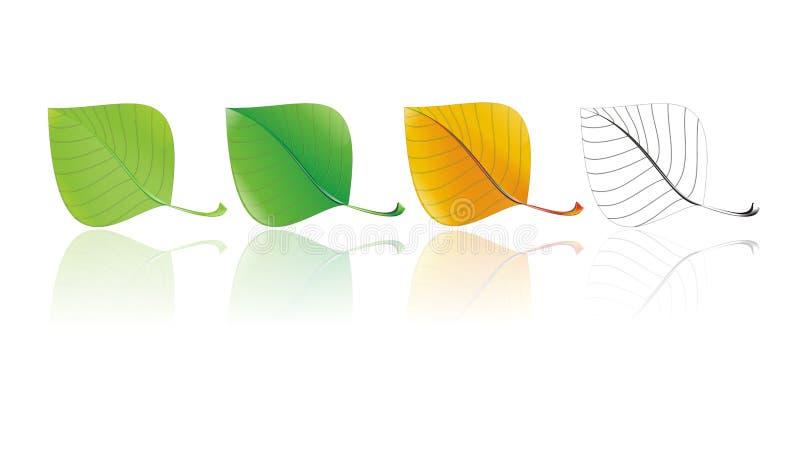 foglia in un'illustrazione di quattro stagioni immagini stock