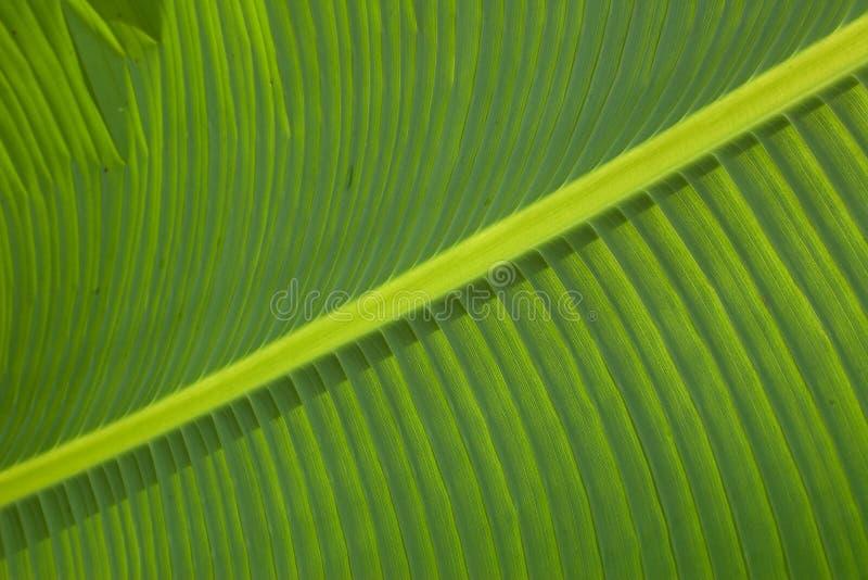 Foglia verde. immagine stock