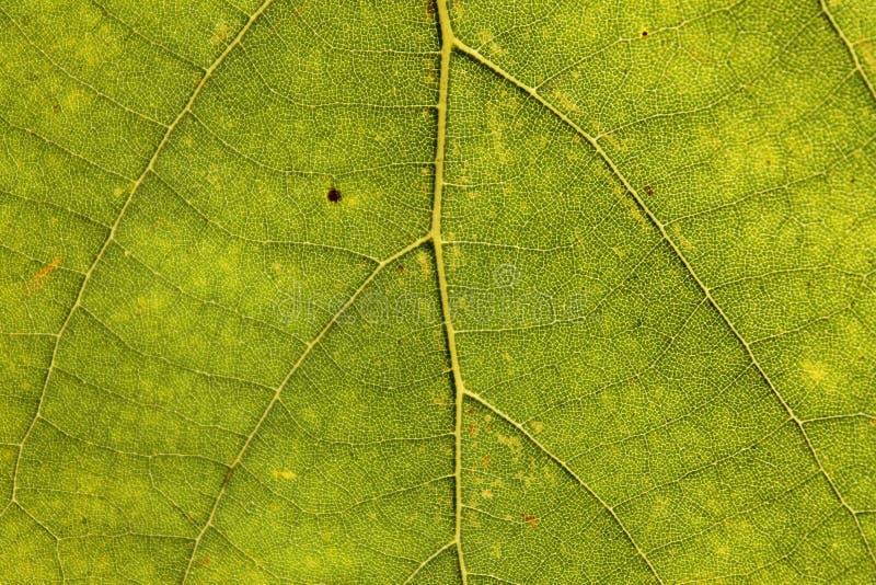 Foglia verde come fondo fotografie stock libere da diritti
