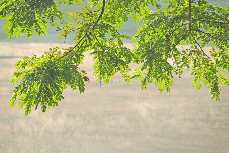 Foglia verde dell'albero sopra acqua fotografie stock