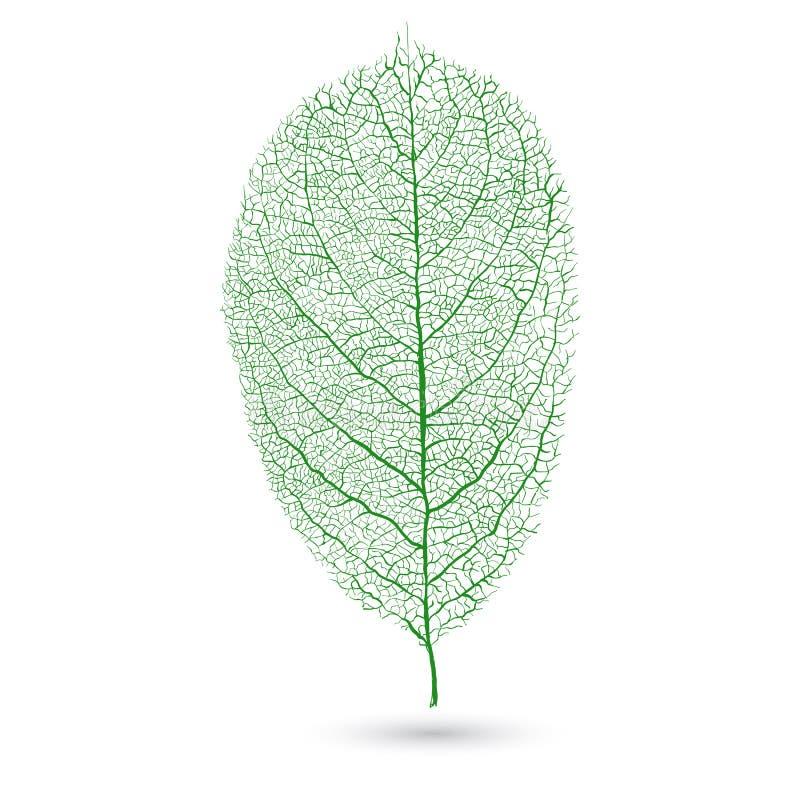 Foglia verde naturale con le vene, isolate su fondo bianco illustrazione vettoriale