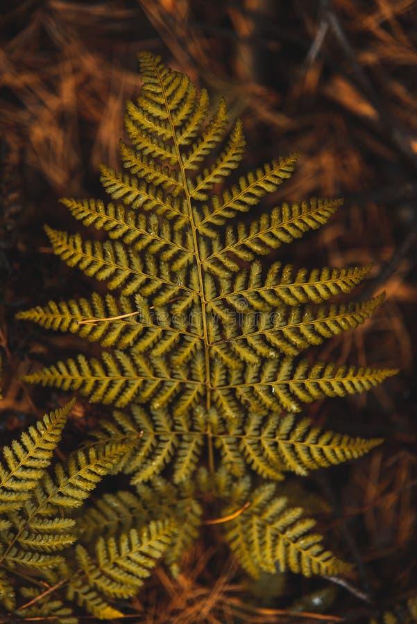 Foglia verde nella foresta di Moody's a Atumn Immagine sfocata e Bokeh fotografie stock