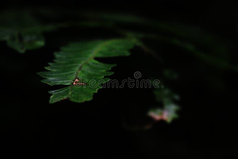 Foglia verde scuro con una cicatrice che conduce nell'oscurità fotografie stock