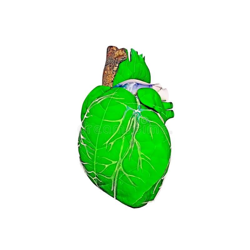 Foglia verde sotto forma di cuore illustrazione di stock