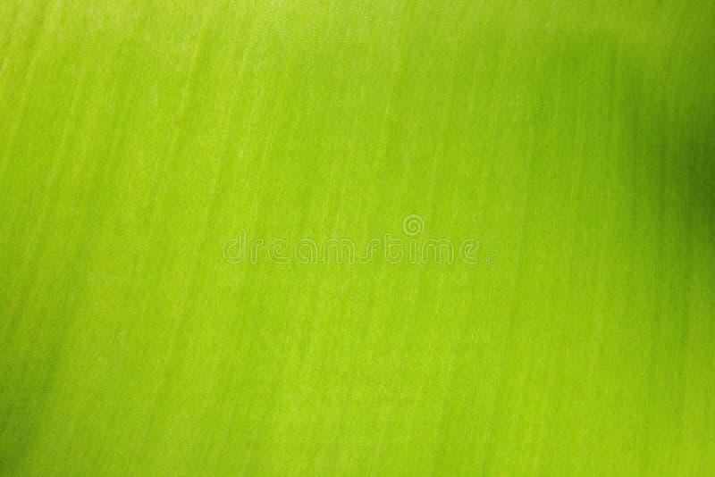 Foglia verde strutturata con la struttura ed il grano, primo piano fotografia stock
