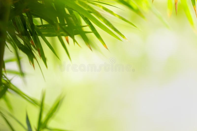 Foglia verde sul fondo vago della pianta Bella struttura della foglia in natura Sfondo naturale fotografie stock libere da diritti