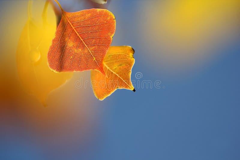 Fogliame colorato di autunno fotografia stock