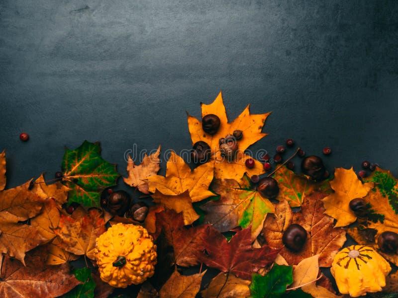 Fogliame d'autunno con zucche, corna, castagne per il Ringraziamento e le vacanze in autunno Sfondo bordo inferiore con spazio di fotografia stock