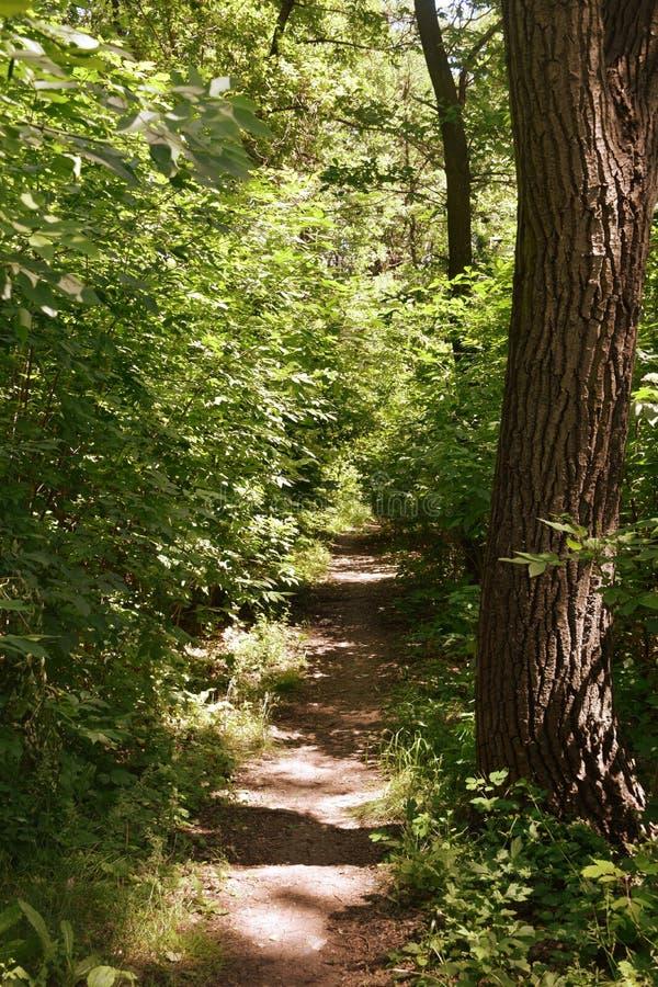 Download Fogliame Degli Alberi Della Steppa Fotografia Stock - Immagine di giungla, nubi: 117979830
