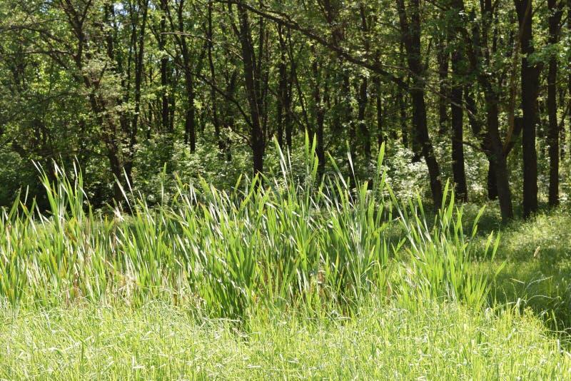 Download Fogliame Degli Alberi Della Steppa Fotografia Stock - Immagine di parco, orizzonte: 117979952