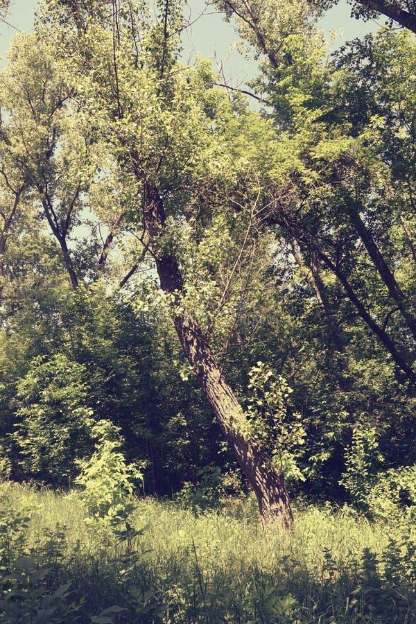 Download Fogliame Degli Alberi Della Steppa Fotografia Stock - Immagine di ambiente, cielo: 117980052