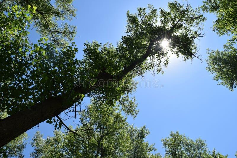 Download Fogliame Degli Alberi Della Steppa Fotografia Stock - Immagine di parco, naughty: 117980106
