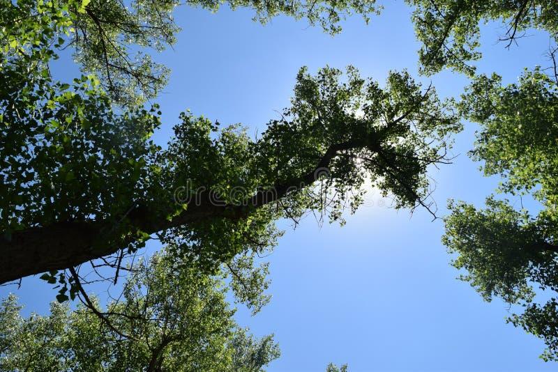 Download Fogliame Degli Alberi Della Steppa Immagine Stock - Immagine di pianta, giungla: 117980109