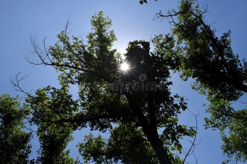 Download Fogliame Degli Alberi Della Steppa Fotografia Stock - Immagine di background, verde: 117980170