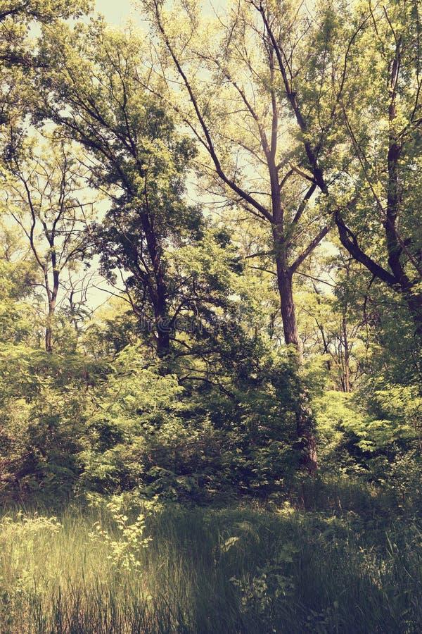 Download Fogliame Degli Alberi Della Steppa Fotografia Stock - Immagine di giungla, fogliame: 117980172