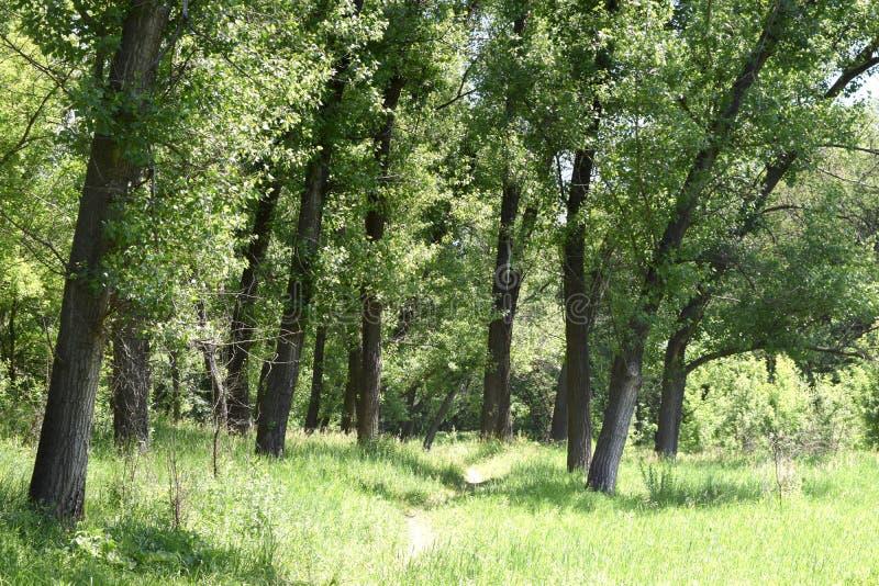 Download Fogliame Degli Alberi Della Steppa Immagine Stock - Immagine di santuario, paesaggio: 117980179