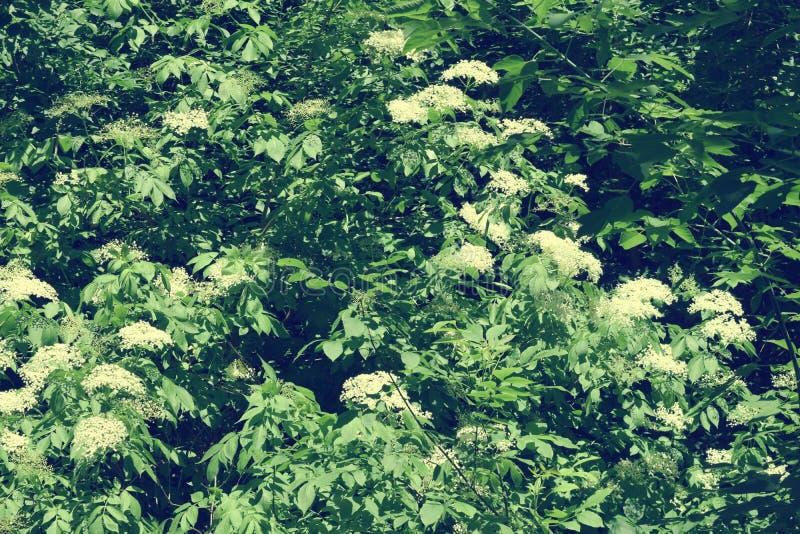 Download Fogliame Degli Alberi Della Steppa Fotografia Stock - Immagine di luminoso, cielo: 117980194