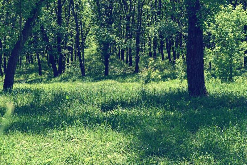 Download Fogliame Degli Alberi Della Steppa Immagine Stock - Immagine di esterno, scenico: 117980201