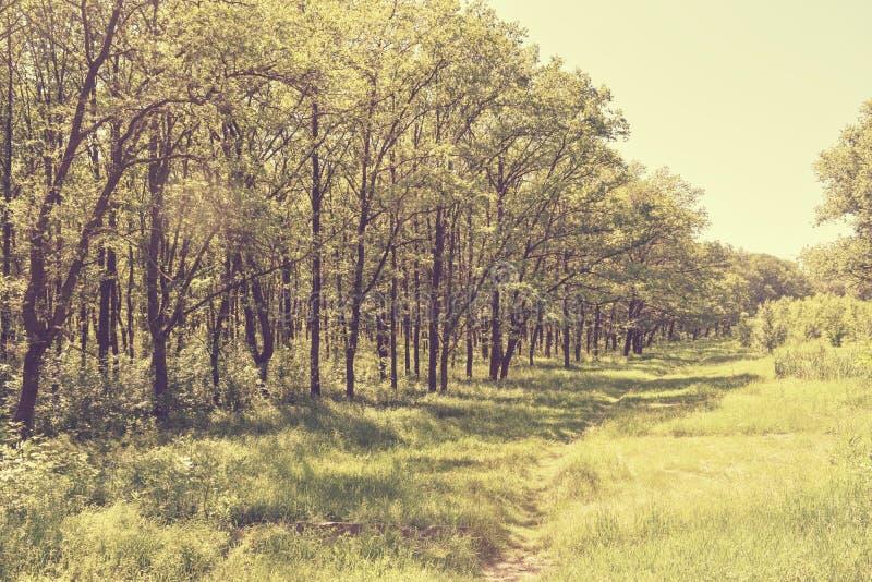 Download Fogliame Degli Alberi Della Steppa Fotografia Stock - Immagine di fogli, paesaggio: 117980228