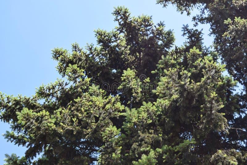 Download Fogliame Degli Alberi Della Steppa Fotografia Stock - Immagine di cielo, paesaggio: 117980274