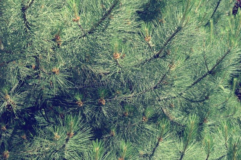 Download Fogliame Degli Alberi Della Steppa Immagine Stock - Immagine di foresta, nero: 117980291