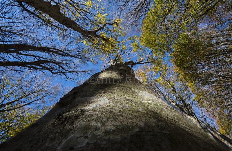 Fogliame del leccio e del cielo blu, autunno, foresta Casentinesi, Toscano immagine stock libera da diritti